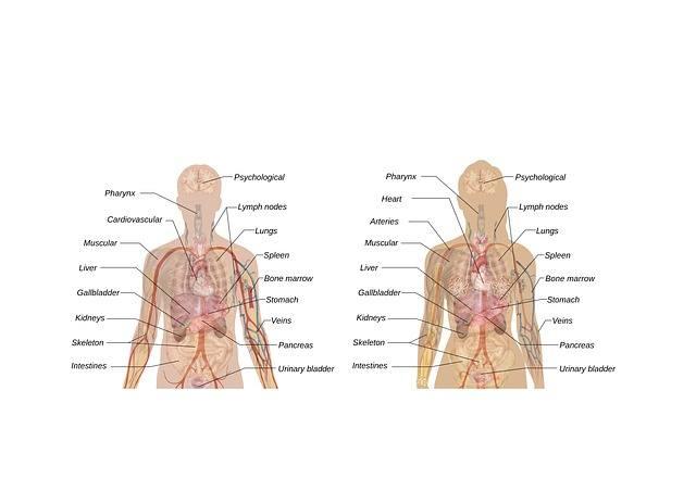 Paleo Food - Maintain Healthy Heart & Kidneys