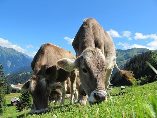 Paleo Diet - Grass-Fed Meat
