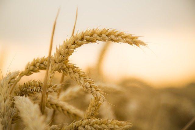 Paleo Diet - No Wheat or Grains