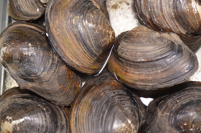 Paleo Diet - Clams