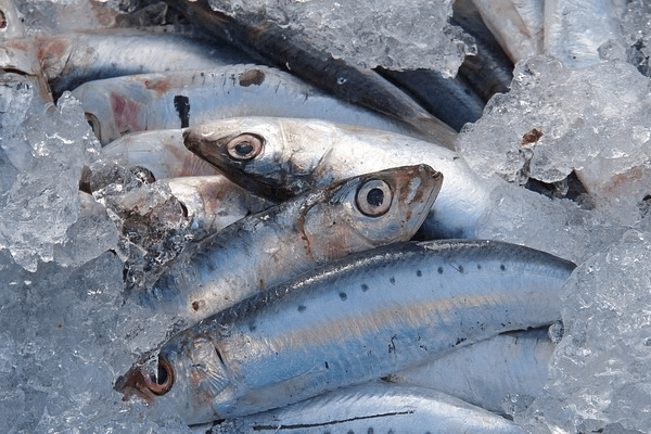 Paleo Diet - Best Fish - Sardines