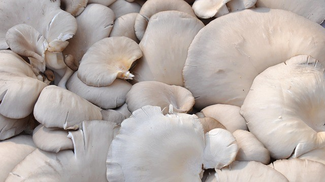 Paleo Food - Oyster Mushrooms
