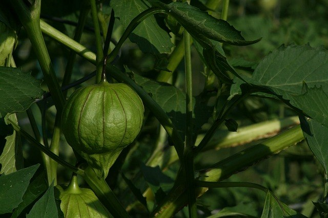 Paleo Food - Tomatillo