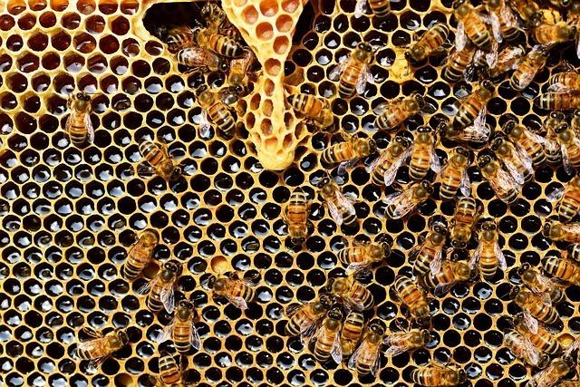 Paleo Diet - Raw Honey