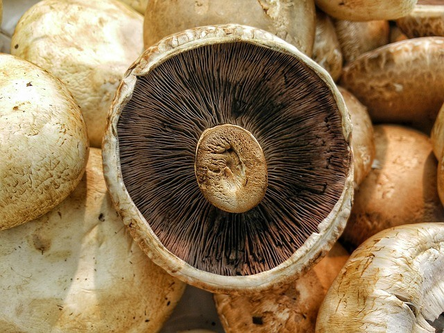 Paleo Food - Portobello Mushrooms