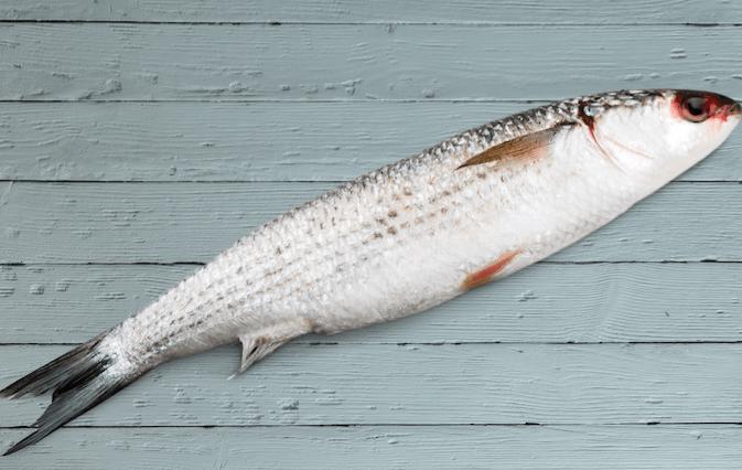 Paleo Food - Wild Salmon