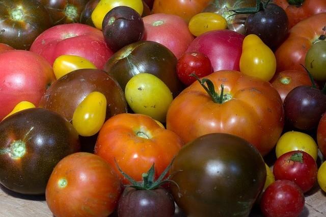 Tomatoes - Nightshade Plant